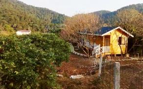 广西柳州三门江森林公园木屋